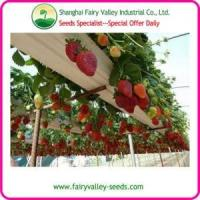 China Bonsai Strawberry Seeds For Landscape on sale