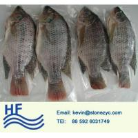Quality Whole Round Tilapia for sale
