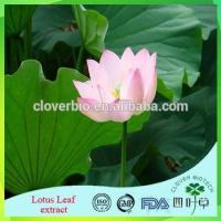 Quality Lotus Root Powder Extract 20:1 /Lotus Seed Extract Nuciferin 0.2% 1% Lotus Leaf Extract for sale