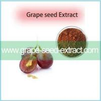 China Excellent Quality Best Price Organic Grape Seed Extract Powder For Sale on sale