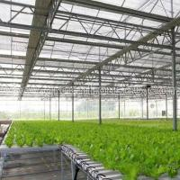 Greenhouse NFT Hydroponic Growing System for Tomato and Lettuce