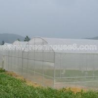 Economical Good Ventilation Anti Insect Netting Greenhouse