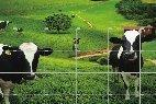 Buy Field Fence at wholesale prices