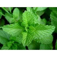 Buy cheap Essential oils Mentha essential oil from wholesalers